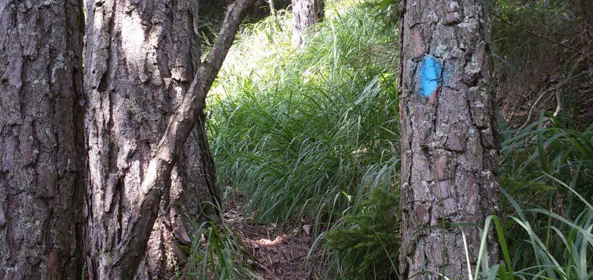 Wildes Markieren im Sonnsteingebiet